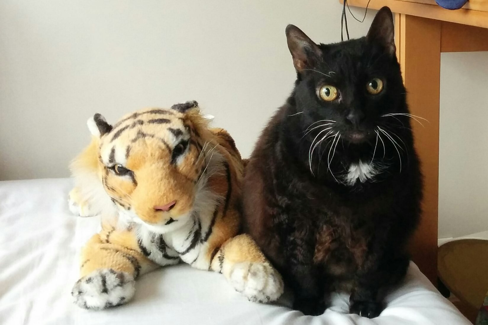 black cat sitting next to a tiger puppet