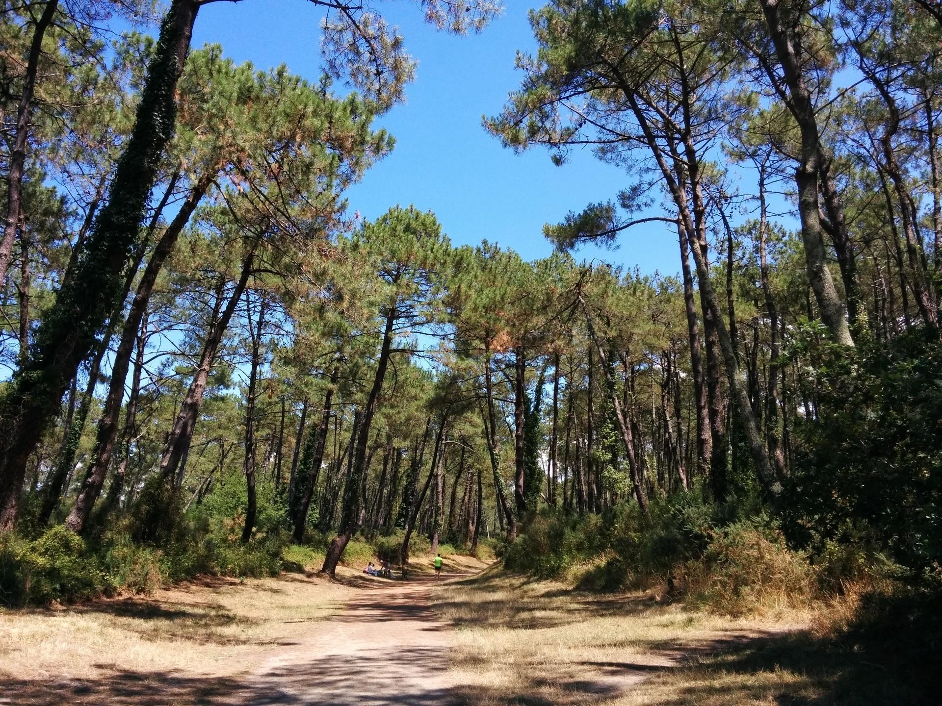 Jogging en été dans la forêt de Chiberta à Anglet