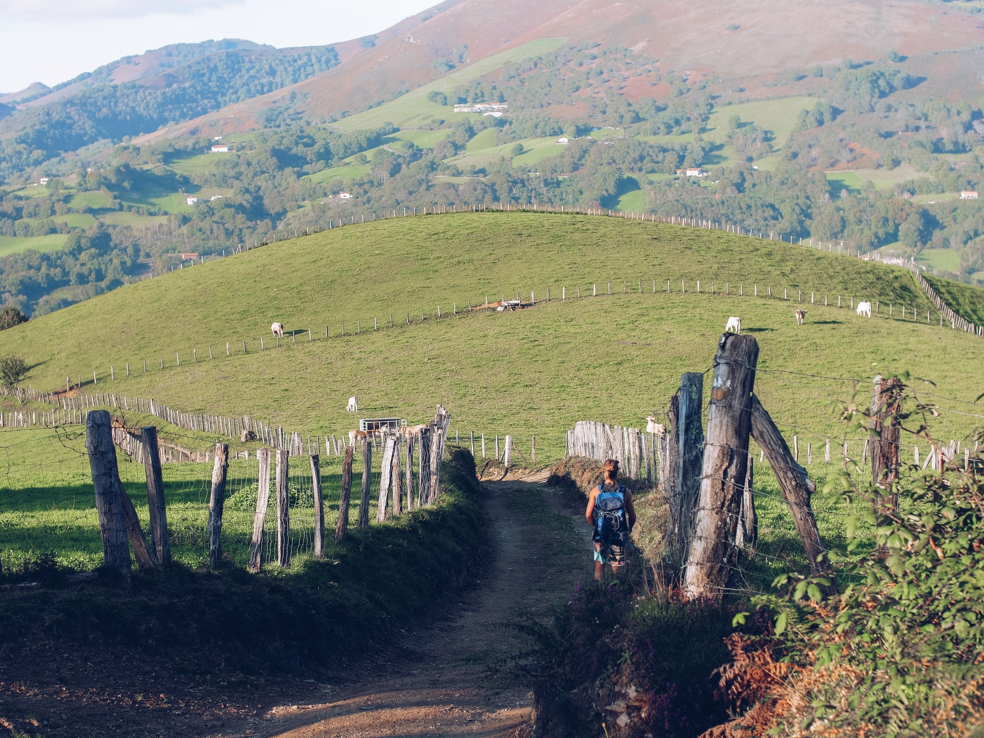 guy hiking on a path between fields in the Basque Country